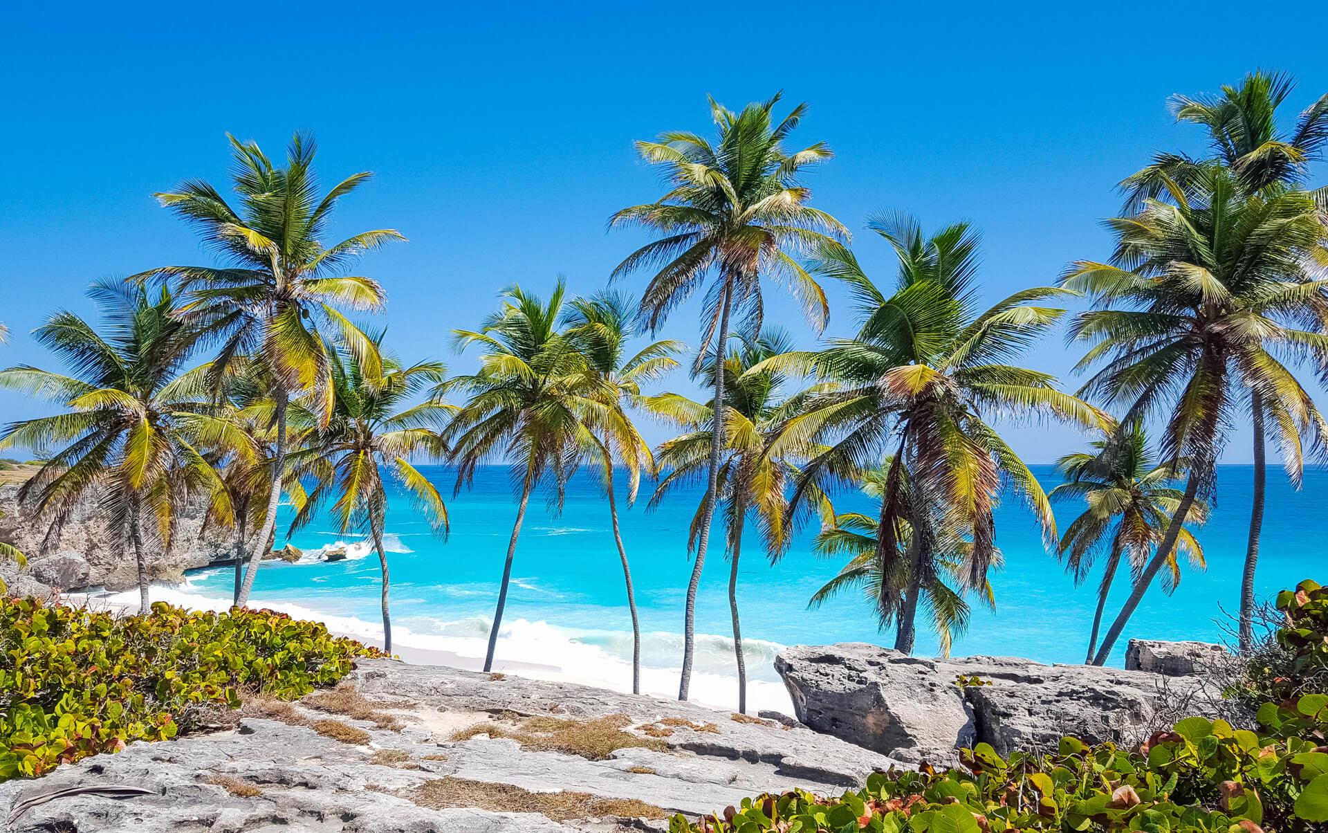 palmtrees-bottom-bay-beach-barbados